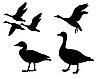 Векторный клипарт: фоне силуэта гусей