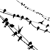 Vector clipart:  silhouette migrating swallow reposing on electric wire