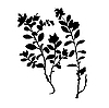 Vector clipart:  silhouette of the plant of the cowberry