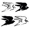 Vector clipart:  drawing of the hawk