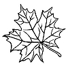 Vector clipart: silhouette of maple leaf