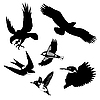 Vector clipart:  of the birds