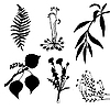 Vector clipart: set of the plants