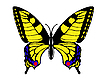 Vector clipart: drawing butterfly swallowtail