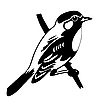 Vector clipart: silhouette of the bird