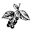 Vector clipart: cherry branch with berries