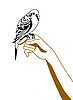 Vector clipart: silhouette of the parrot on hand