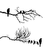 Vector clipart: silhouette of the birds on branch