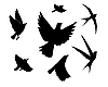 Vector clipart: flying birds silhouette