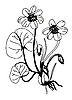 Vector clipart: field flower silhouette
