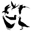 Векторный клипарт: Чайка