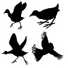 Vector clipart: silhouette of the birds