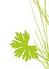 Векторный клипарт: зеленый лист