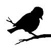 Векторный клипарт: птица на ветке силуэт