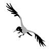 Vektor Cliparts: Krähe