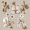 Векторный клипарт: поле цветы
