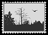 Vector clipart: silhouette of the bird on postage stamp,