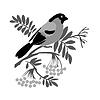 bullfinch silhouette on rowanberry branch,