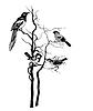 Векторный клипарт: силуэт птицы,