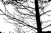 Векторный клипарт: Дерево силуэт,