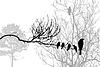 Векторный клипарт: силуэт птицы на лесной отрасли,