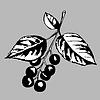 Векторный клипарт: вид вишневого дерева
