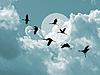 在阴天背景剪影飞鹤 | 免版税照片