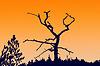 Photo 300 DPI: silhouette dry tree