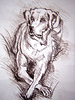 Photo 300 DPI: drawing sketch of a dog
