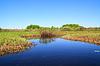 스프링 필드에 작은 강 | Stock Foto