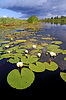ID 3245323 | Water lilies on small lake | High resolution stock photo | CLIPARTO