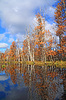 Herbst Holz Küste am Fluss | Stock Photo