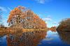 Oak wood on coast river | Stock Foto