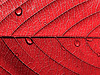 Red leaf with drops | Stock Foto