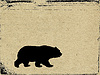 Photo 300 DPI: bear on grunge background
