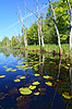 ID 3252079 | Green water lilies on small lake | High resolution stock photo | CLIPARTO