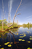 ID 3252081 | Green water lilies on small lake | High resolution stock photo | CLIPARTO