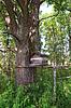 Wooden hive in oak wood | Stock Foto