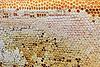 Bee honeycomb | Stock Foto