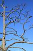 Photo 300 DPI: old dry tree