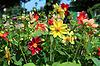 ID 3255268 | Flowerses w ogrodzie | Foto stockowe wysokiej rozdzielczości | KLIPARTO