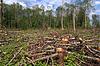 Chopping wood | Stock Foto