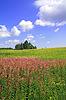 Summer field | Stock Foto