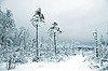 겨울 나무 | Stock Foto