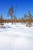 ID 3264003 | Spur Zobel auf Schnee | Foto mit hoher Auflösung | CLIPARTO