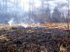 Fire in wood   Stock Foto
