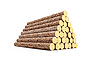 Stack of pine logs | Stock Illustration