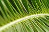 Фото 300 DPI: пальмовые листья