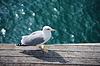 野鸥   免版税照片