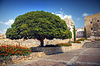 거대한 나무 | Stock Foto
